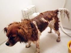 ウナギ犬で〜す。 こうして見るとCooも痩せて見えるでしょう?