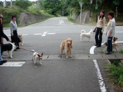 まだまだ一緒にお散歩した〜い!