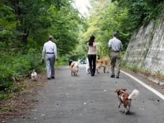 楽しいお散歩に人も犬もテンション高し!