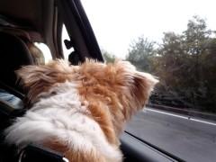 車内のギズモも心配そうに外を眺めます。ギ「果たして、どうだろうねぇ…」