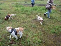 犬達「草は美味しいよぉ〜」