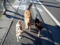 足並み揃えて仲良くお散歩です。