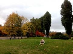 札幌もすっかり紅葉