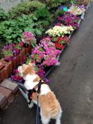 わ「お花もキレイだね〜」
